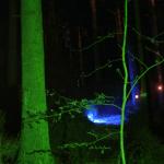 """""""Der Wald"""""""