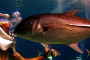 (c) Coral World Park Undersea Resort