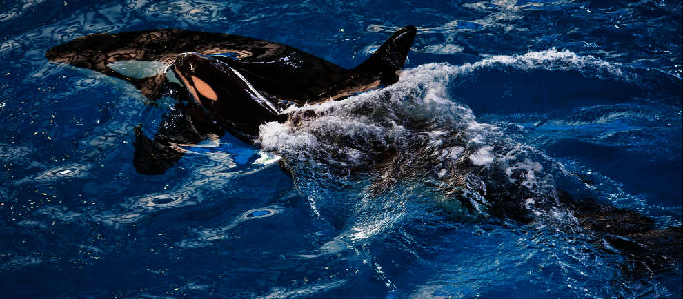 (c) SeaWorld