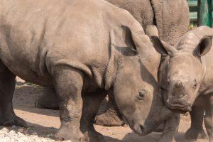 (c) Serengeti Park