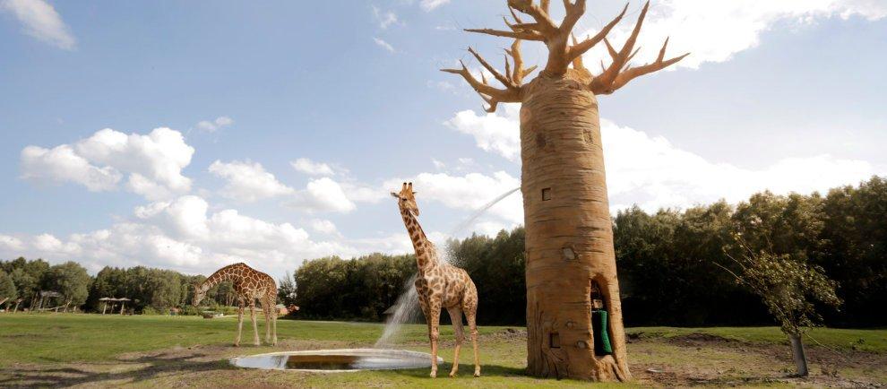 """Serengeti Interactive"" (c) Serengeti-Park / Jora Vision"