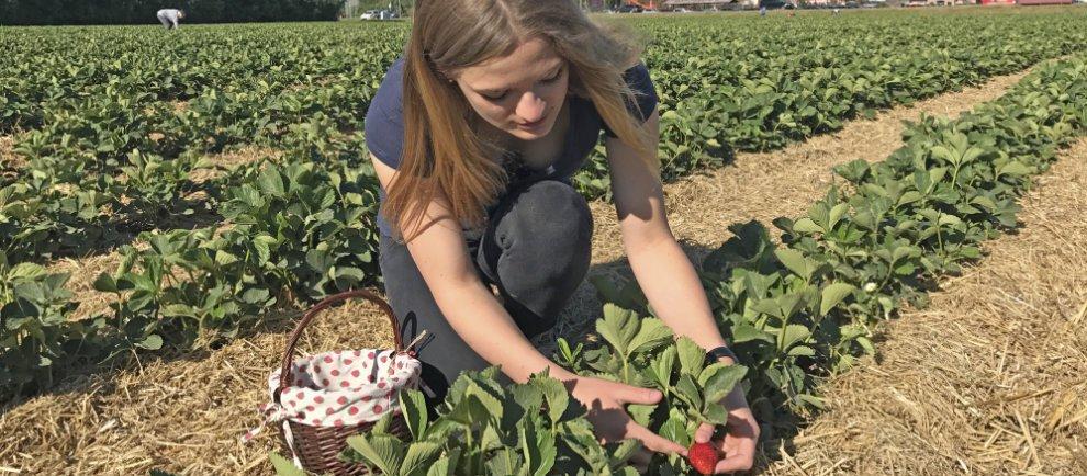 Karls Erdbeeren selber pflücken (c) Karls Erdbeer-Hof