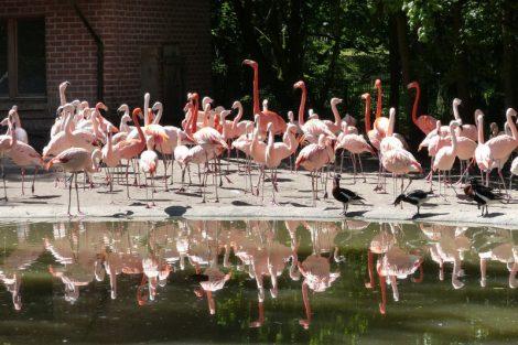 Einige der tierischen Bewohner des Parks (c) Tier und Freizeitpark Thüle