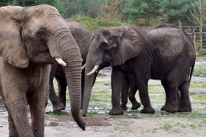 (c) Serengeti-Park