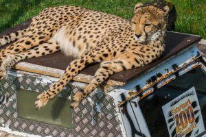 © Zoo Safaripark Stukenbrock