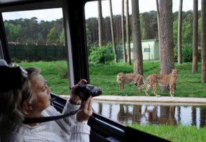 Aufgrund hoher Nachfrage an geführten Touren, wurde die Elite-Safari nun vorgestellt © Serengeti-Park