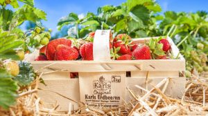 Erdbeerkorb mit frischen Früchten © Karls Erdbeer-Hof