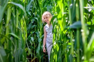 Karls neues Maislabyrinth lockt in das Reich der Mayas © Karls Erlebnis-Dorf