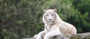 Safariland Stukenbrock Gutschein – Tickets für 22,50€