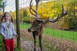 Unter anderem Rotwild erwartet Dich im Wildpark © Eifelpark