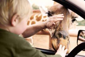 Eine Giraffe mal hautnah erleben! © Safariland Stukenbrock