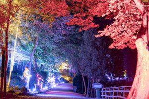 Die Eifelpark Herbstleuchten © Eifelpark