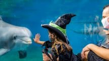 """Halloween Spooktacular"" © SeaWorld Orlando"